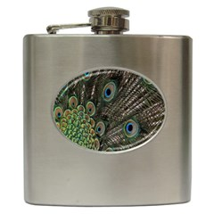 Close Up Of Peacock Feathers Hip Flask (6 Oz) by Nexatart