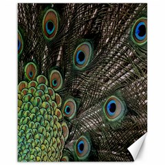 Close Up Of Peacock Feathers Canvas 16  X 20   by Nexatart