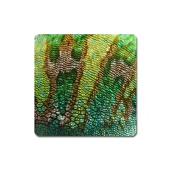 Chameleon Skin Texture Square Magnet by BangZart