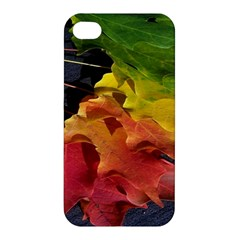 Green Yellow Red Maple Leaf Apple Iphone 4/4s Premium Hardshell Case by BangZart