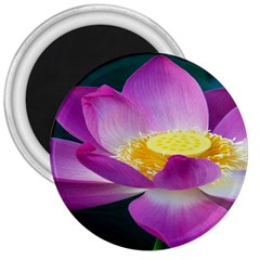 Pink Lotus Flower 3  Magnets by BangZart