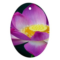 Pink Lotus Flower Ornament (oval) by BangZart