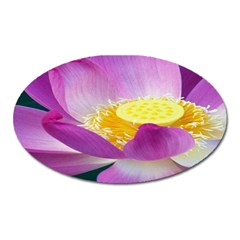 Pink Lotus Flower Oval Magnet by BangZart
