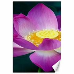 Pink Lotus Flower Canvas 24  X 36