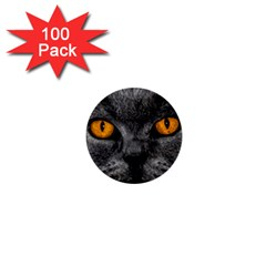 Cat Eyes Background Image Hypnosis 1  Mini Buttons (100 Pack)  by BangZart