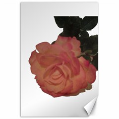 Poppys Last Rose Close Up Canvas 20  X 30   by TailWags