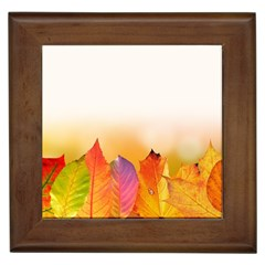 Autumn Leaves Colorful Fall Foliage Framed Tiles by BangZart