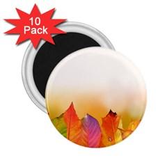 Autumn Leaves Colorful Fall Foliage 2 25  Magnets (10 Pack)  by BangZart