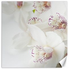 Orchids Flowers White Background Canvas 20  X 20   by BangZart