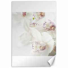 Orchids Flowers White Background Canvas 20  X 30   by BangZart