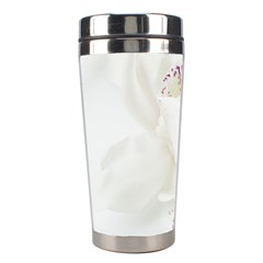 Orchids Flowers White Background Stainless Steel Travel Tumblers by BangZart
