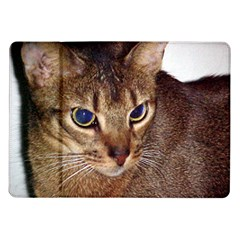 Abyssinian 2 Samsung Galaxy Tab 10.1  P7500 Flip Case by TailWags