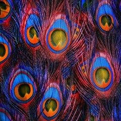 Pretty Peacock Feather Canvas 20  X 20   by BangZart