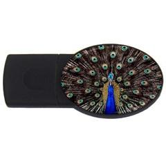Peacock Usb Flash Drive Oval (4 Gb) by BangZart