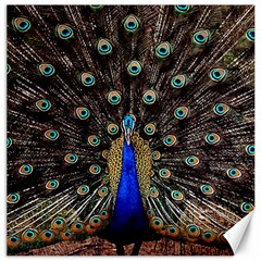 Peacock Canvas 20  X 20   by BangZart