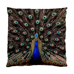 Peacock Standard Cushion Case (one Side) by BangZart