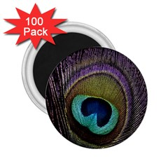 Peacock Feather 2 25  Magnets (100 Pack)  by BangZart