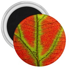 Nature Leaves 3  Magnets by BangZart