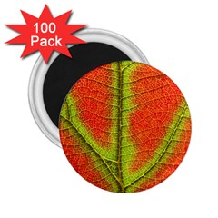 Nature Leaves 2 25  Magnets (100 Pack)  by BangZart