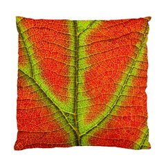 Nature Leaves Standard Cushion Case (one Side) by BangZart