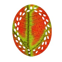 Nature Leaves Oval Filigree Ornament (two Sides) by BangZart
