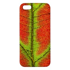 Nature Leaves Iphone 5s/ Se Premium Hardshell Case by BangZart