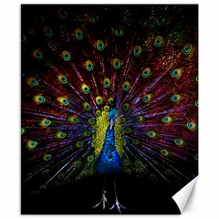Beautiful Peacock Feather Canvas 8  X 10  by BangZart