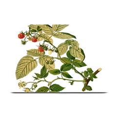 Berries Berry Food Fruit Herbal Plate Mats by Nexatart