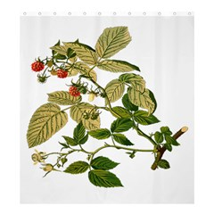 Berries Berry Food Fruit Herbal Shower Curtain 66  X 72  (large)  by Nexatart