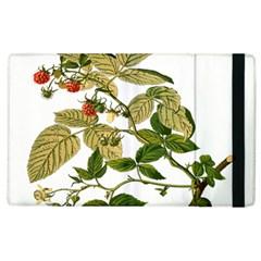 Berries Berry Food Fruit Herbal Apple Ipad 2 Flip Case by Nexatart