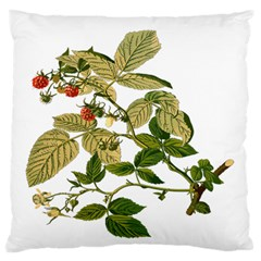 Berries Berry Food Fruit Herbal Large Flano Cushion Case (two Sides) by Nexatart