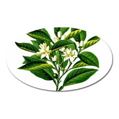 Bitter Branch Citrus Edible Floral Oval Magnet by Nexatart