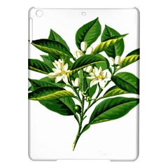 Bitter Branch Citrus Edible Floral Ipad Air Hardshell Cases by Nexatart