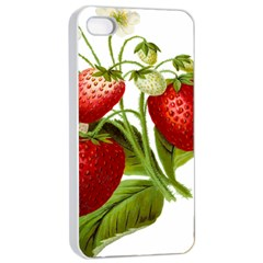 Food Fruit Leaf Leafy Leaves Apple Iphone 4/4s Seamless Case (white) by Nexatart