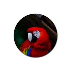 Scarlet Macaw Bird Rubber Coaster (round)  by BangZart
