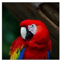 Scarlet Macaw Bird Large Satin Scarf (square) by BangZart