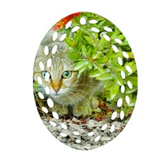 Hidden Domestic Cat With Alert Expression Oval Filigree Ornament (two Sides) by dflcprints