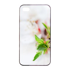 Fragility Flower Petals Tenderness Leaves  Apple Iphone 4/4s Seamless Case (black) by amphoto