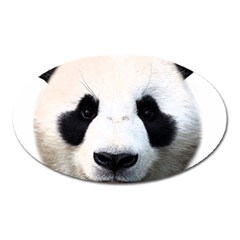 Panda Face Oval Magnet by Valentinaart