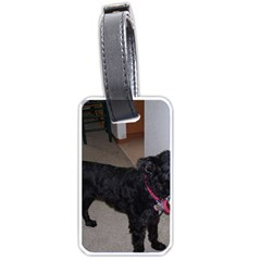 Bouvier Shaved Luggage Tags (two Sides) by TailWags