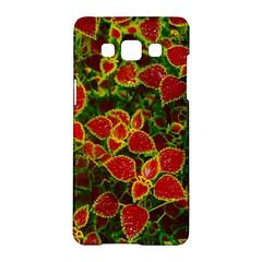 Flower Red Nature Garden Natural Samsung Galaxy A5 Hardshell Case  by Nexatart