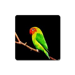 Parrot  Square Magnet by Valentinaart