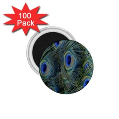 Peacock Feathers Blue Bird Nature 1 75  Magnets (100 Pack)  by Nexatart
