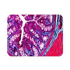 Histology Inc Histo Logistics Incorporated Masson s Trichrome Three Colour Staining Double Sided Flano Blanket (mini)  by Mariart