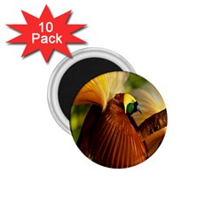 Birds Paradise Cendrawasih 1 75  Magnets (10 Pack)  by Mariart