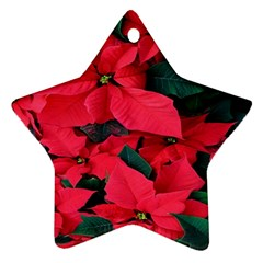 Red Poinsettia Flower Star Ornament (two Sides) by Mariart