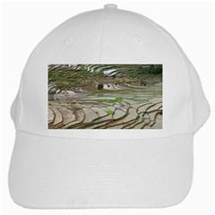 Rice Fields Terraced Terrace White Cap by Nexatart