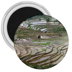 Rice Fields Terraced Terrace 3  Magnets by Nexatart