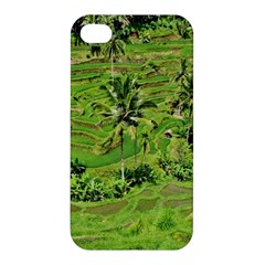 Greenery Paddy Fields Rice Crops Apple Iphone 4/4s Premium Hardshell Case by Nexatart