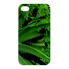 Vivid Tropical Design Apple Iphone 4/4s Premium Hardshell Case by dflcprints